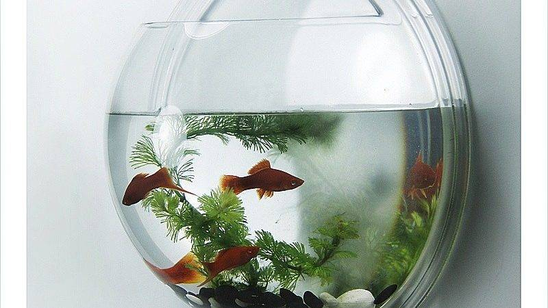 Acrylic Wall Mounted Fish Bowl Hanging Tank