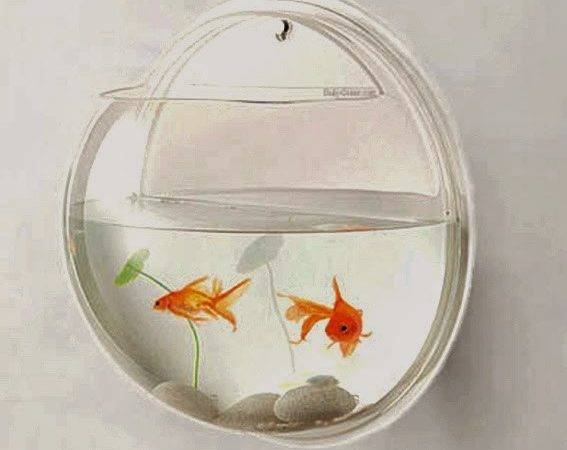 Amazing Creative Products Wall Mounted Fish Bowl