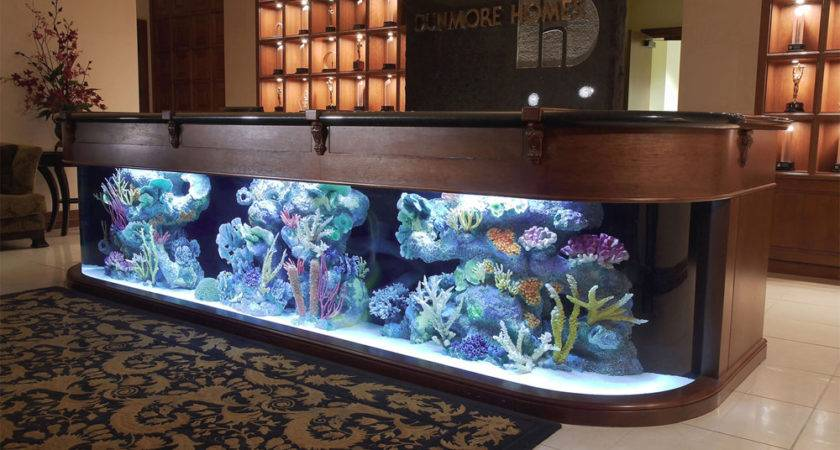 Aquarium Company Designs Service Supplies Aquariums