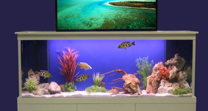 Aquarium Fresh Design Blog