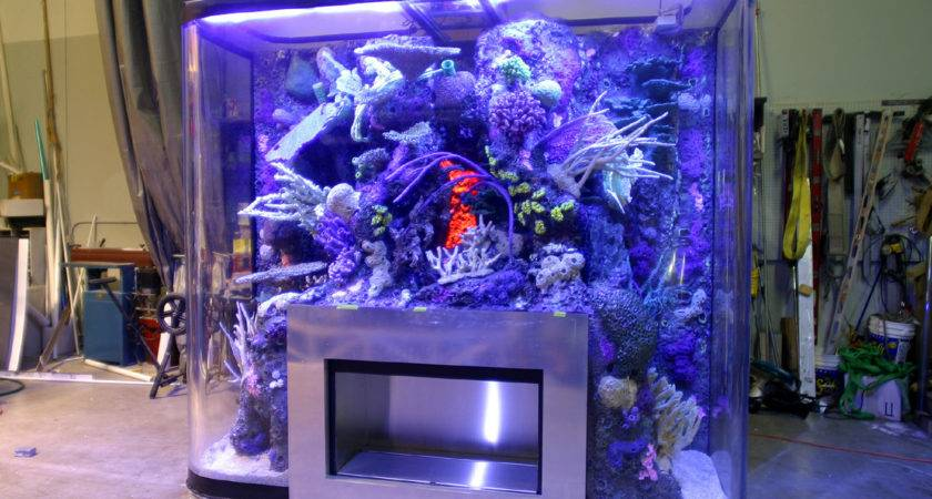 Aquarium Shop Design Ideas