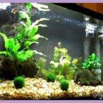 Best Aquarium Designs Homedesigns