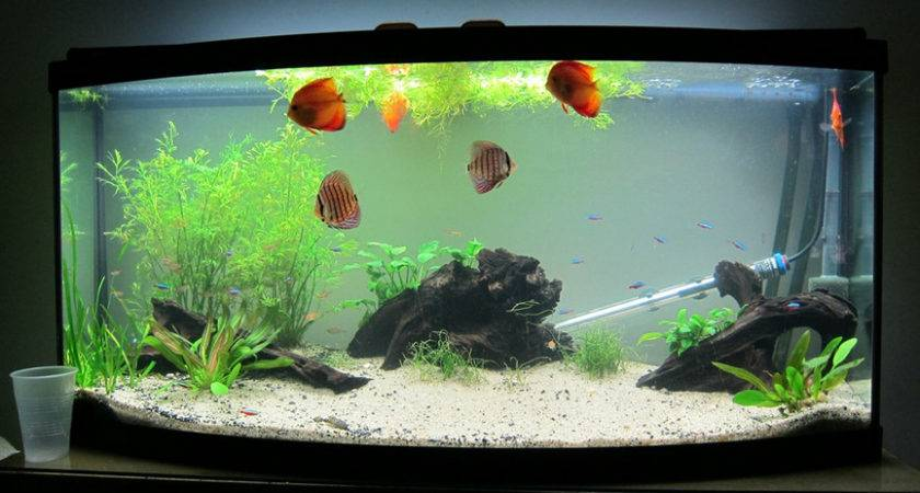 Best Aquarium Designs Inspired Nature Home