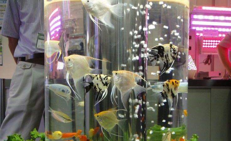 Best Aquarium Mania Pinterest Fish Tanks