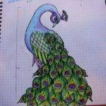 Best Birds Pinterest Peacock Drawing