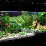 Best Fish Tank Ideas Pet Lovers Life