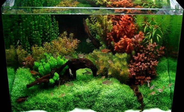 Best Gallon Fish Tank Ideas Pinterest