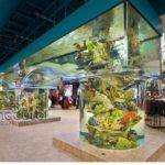 Best Living Color Aquariums Pinterest