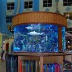 Best Living Color Aquariums Retail Installations