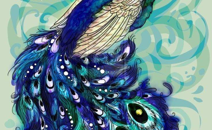 Best Peacock Drawing Ideas Pinterest Kids