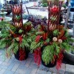 Best Winter Container Gardens Wreaths