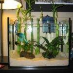 Betta Care Housing