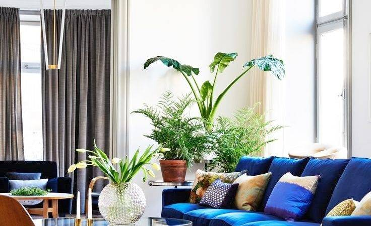 Blue Couch Living Room Ideas Home Design