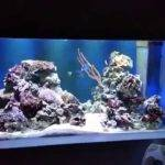 Built Wall Marine Fish Tank Aquarium Gal