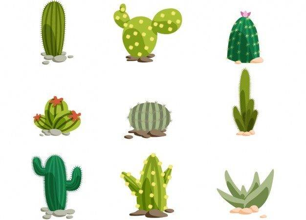 Cactus Collection Vector Premium