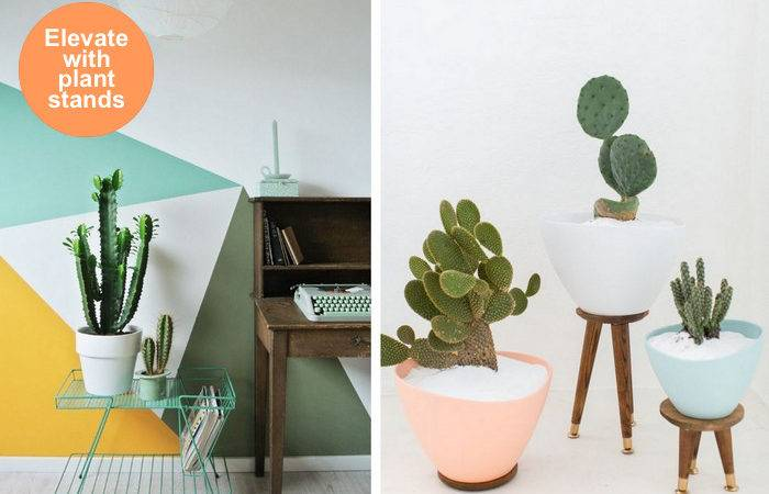 Cactus Crush Display Plants Your Home