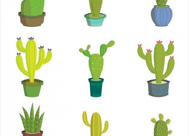 Cactus Design Collection Vector