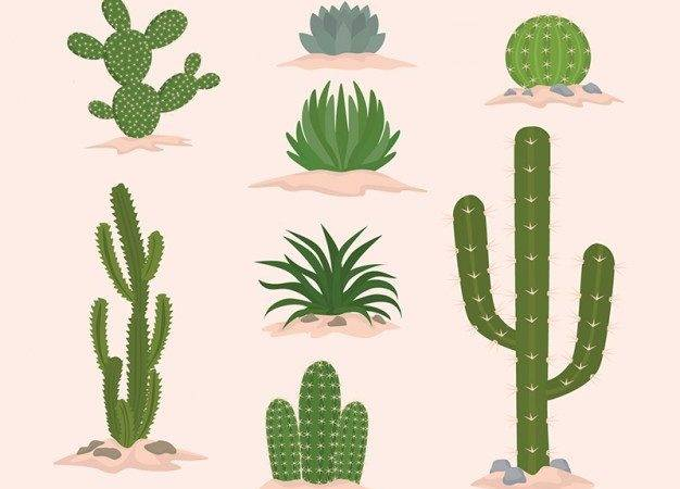 Cactus Flat Design Collection Vector Premium