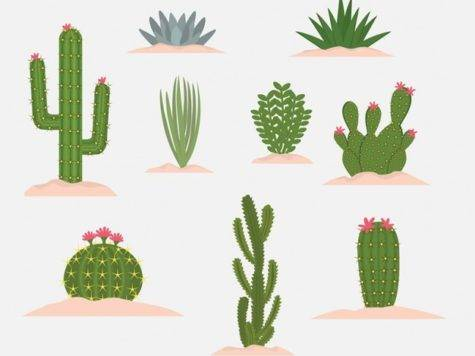 Cactus Vectors Photos Psd Files
