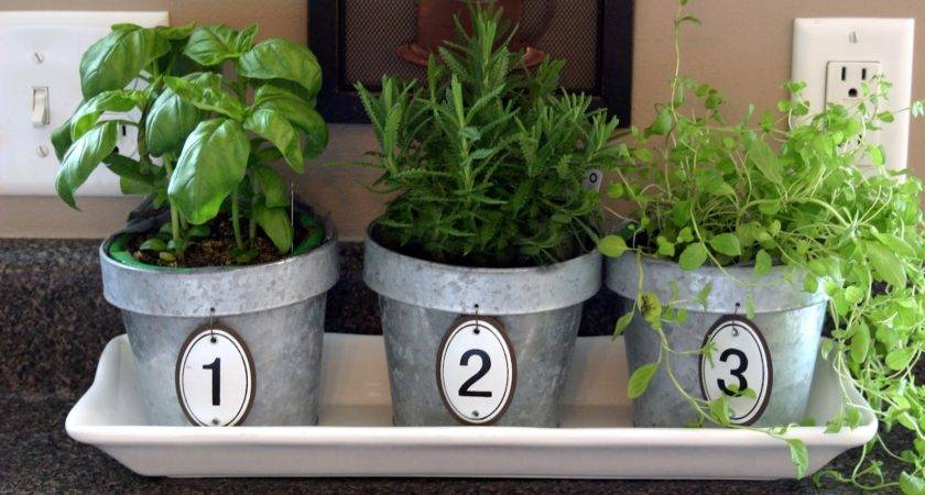 Chic Shoestring Decorating Kitchen Herbs Numbered