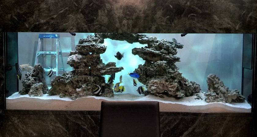 City Aquarium Custom Aquariums Design