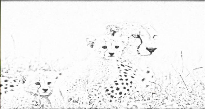 Coloring Draw Leopard Print Pencil Well