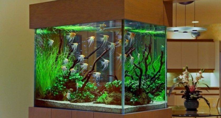 Cool Fish Tanks Pets Home Aquariums