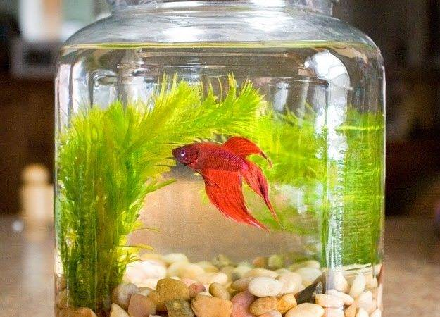 Cool Glass Fish Bowl Decorations Ideas Tips