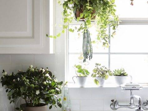 Creative Ways Include Indoor Plants Your Home