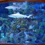 Custom Aquariums Reef Tanks Aquarium Start Service