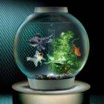 Custom Built Fish Tank Joy Studio Design Best