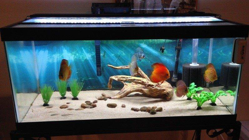 Custom Bullnosed Acrylic Aquarium Offers Diners Oceanside