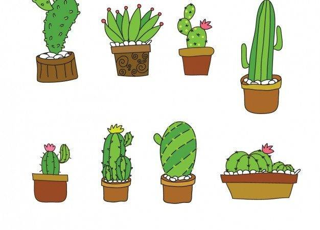 Cute Cactus Collection Flat Design Vector