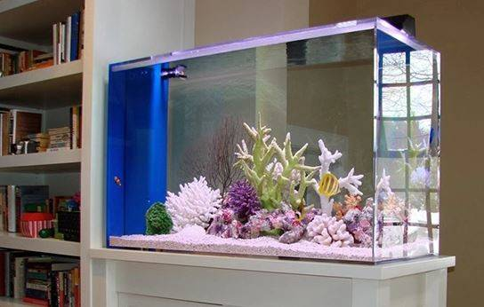 Decorate Your House Fish Tank