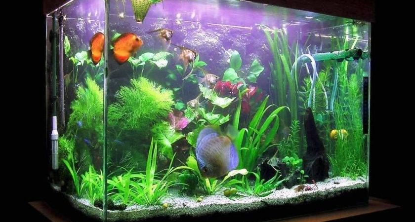 Decorating Fish Aquarium Ideas Design