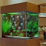Decoration Best Fish Tank Saltwater Aquarium Design