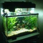 Decoration Small Aquarium Themes