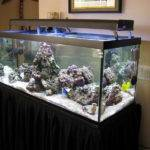 Decoration Small Saltwater Aquarium Design Ideas