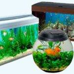 Feng Shui Room Aquarium Interior Decorating