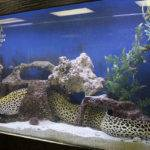 Fish Aquarium Design Ideas