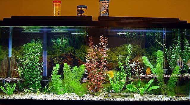 Fish Aquarium Themes Unique Ideas Tank