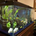 Fish Tank Aquarium Design Installations