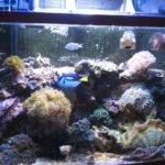 Fish Tank Decorations Ideas Some