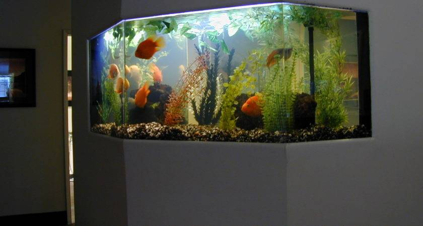 Fish Tank Home Aquaponics
