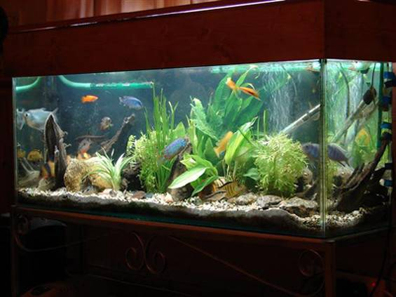 Fish Tank Home Diy Aquaponics System