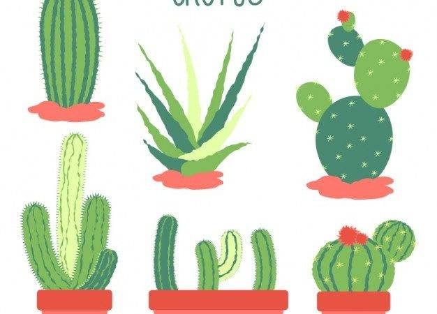 Flat Design Cactus Collection Vector
