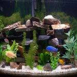 Freshwater Aquarium Design Ideas