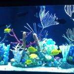 Gallon Salt Water Aquarium Living Color