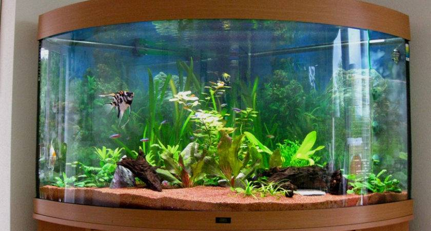Good Ideas Aquarium Decor Fish Planted