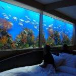 Great Ideas Fish Tank Bed Your Glamorous Bedroom